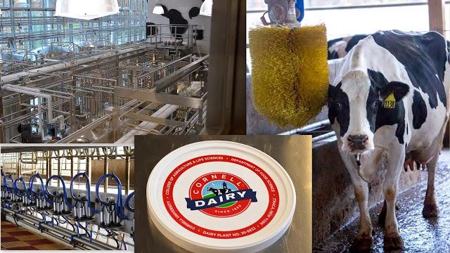 Cornell Dairy Farm