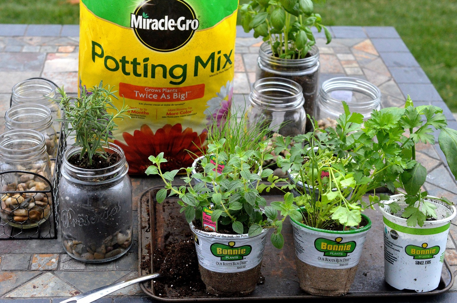 Easy Indoor Outdoor Glass Jar Garden